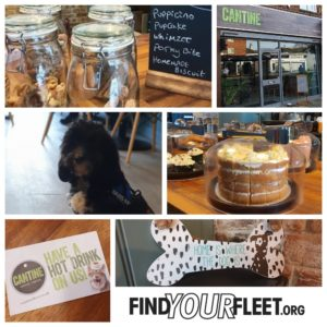Cantine. dog friendly cafe in Fleet, Hampshire
