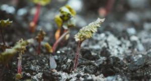 green shoots garden community